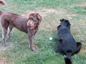 Wilson & Deezer
