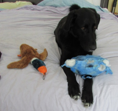 Deezer a few months ago, just made me smile. He loves his toys