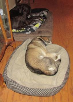 Big Bed Swayp - skittles on Dude's